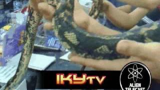ikyTV: Deadly Boa Constrictor Around my Neck!!!