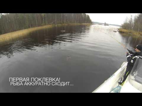Saimaa, очень холодно, но мы ловим.