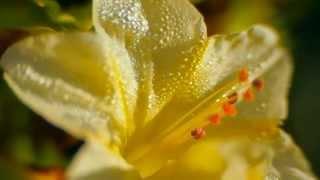www.kdv888.ru , ФУТАЖИ. Крым, Бахчисарай, природа, красота, макро, цветы, животные, насекомые(Качественная ВИДЕО и ФОТО съёмка. САЙТ: http://www.kdv888.ru/ ТЕЛ.: :+7 (978) 023 - 98 - 24., 2014-01-12T20:37:41.000Z)