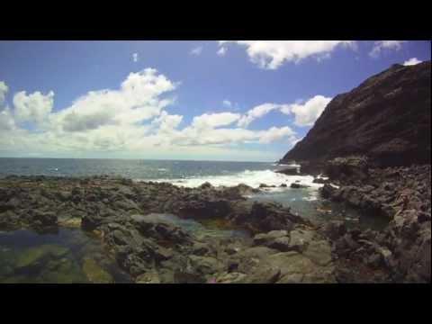 Hawaiian Reef Fishes