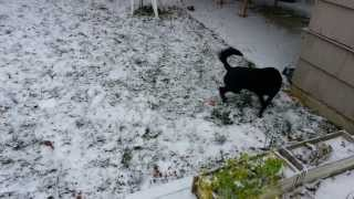 Puppy's First Time Playing With Snow! Cute!