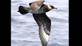видео Южный океан. Существует или нет?... | Свободное географическое общество | ВКонтакте