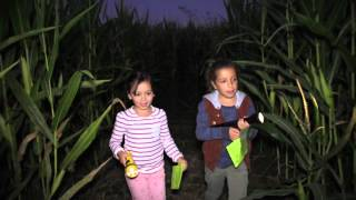 Spooky Corn Maze