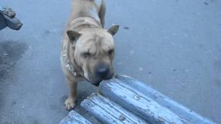 собаки Украины - ужас..., но голодные собаки.avi