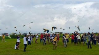 Gathering Free Flight Indonesian Parrot Lovers At Bandung