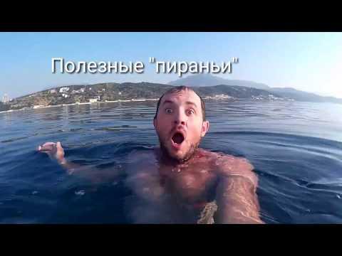 """Крым 2017. Алушта. """"Ужас""""!!! В Алуште появились """"пираньи""""!"""