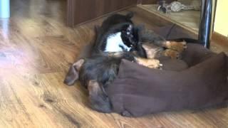 Kot i pies walczą o posłanie