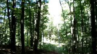 Treetop Trekking at Horseshoe Valley