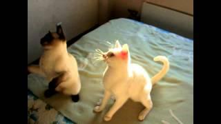 Как два кота за одной дразнилкой прыгали! Тайские кошки - это чудо! Funny Cats
