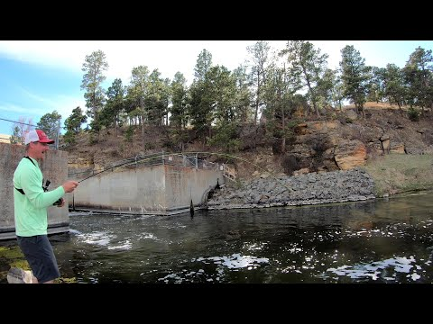 Flyfishing Spillway One Hour Power (four Pike And A Walleye)