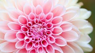 Een andere kwaliteit van leven | Anandajay