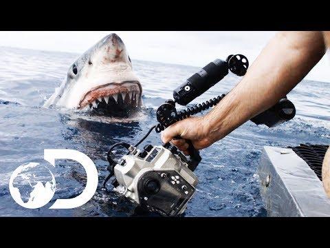 35ft Great White Shark Lurking in 'The Kill Zone' | Super Predator