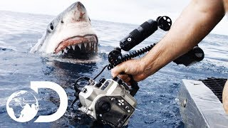 35ft Great White Shark Lurking in \'The Kill Zone\' | Super Predator
