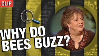 QI | Why Do Bees Buzz?