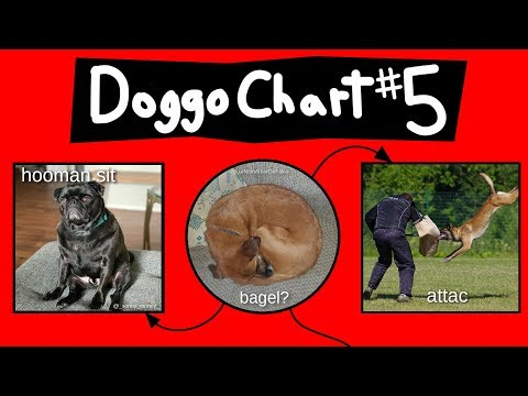 doggo-chart---part-5