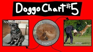 doggo-chart-part-5