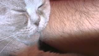 коту снится мама