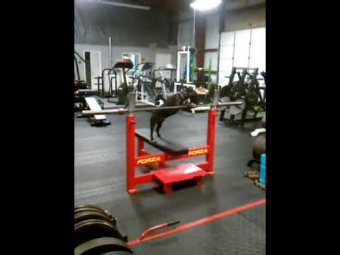 How to properly clean gym equipment