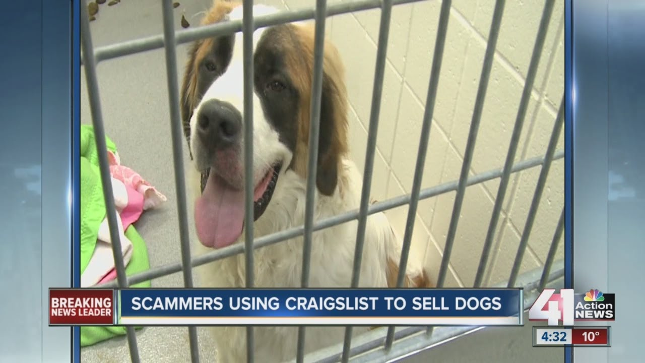 Scammers Using Craigslist To Sell Dogs