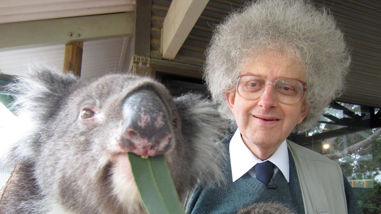 Koala bears and eucalyptus periodic table of videos youtube urtaz Image collections