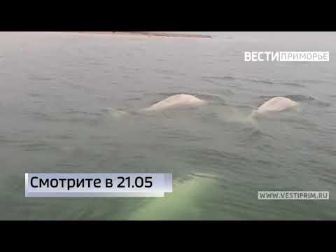 "Анонс сюжета на 21.05 в программе ""Вести: Приморье"""