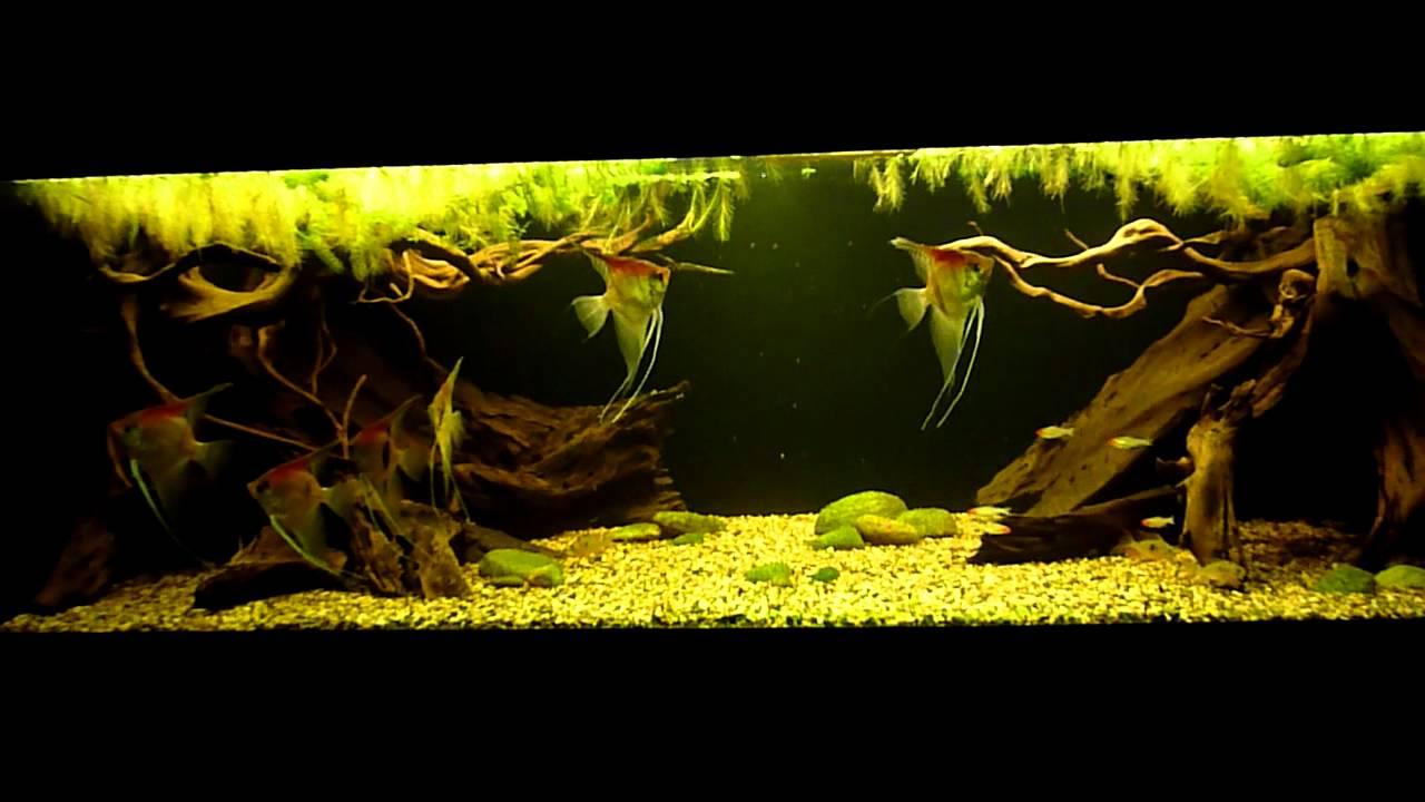 Amazon biotope aquarium 2 doovi for Amazon fish tank