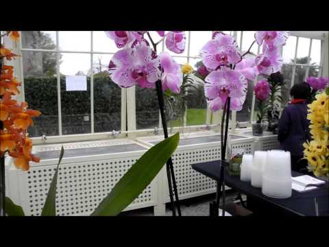 Orchids Display at the Botanic Gardens Dublin April 2015