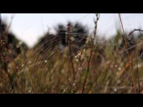 Voras mezga tinklą