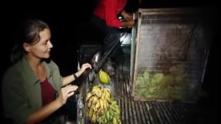 Saving a baby Orangutan, Part Two - Orangutan Diary - BBC