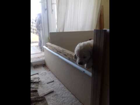 Puppy escape genius