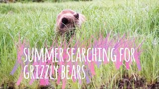 Summer Searching for Grizzly Bears