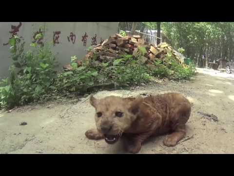 SHOCKING Cruelty Revealed: Chinese Circus Industry