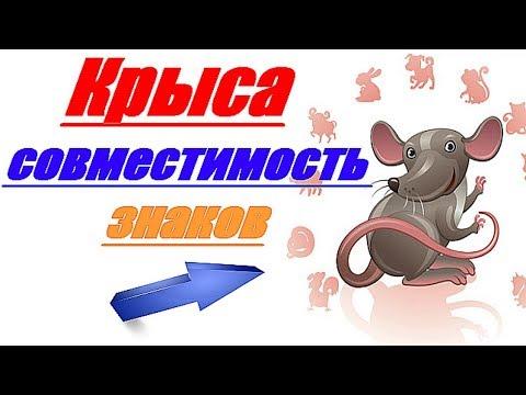 Крыса совместимость знаков