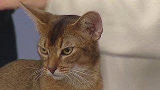 Что такое кошачий питомник