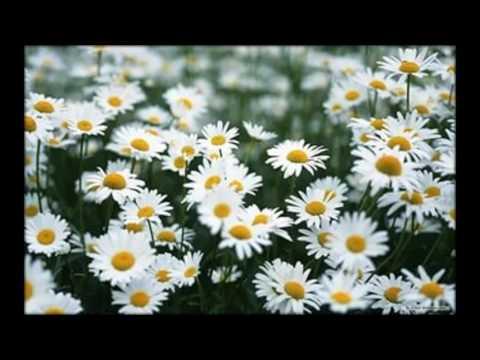 купить семена цветов оптом+