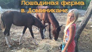 Гуляем на лошадиной ферме в Доминикане. Влог. Мои путешествия(Привет, с тобой я, Маргарита! Лошадиная ферма, лошади и собачки в этом видео. Сейчас ты можешь посмотреть..., 2016-01-23T07:57:35.000Z)