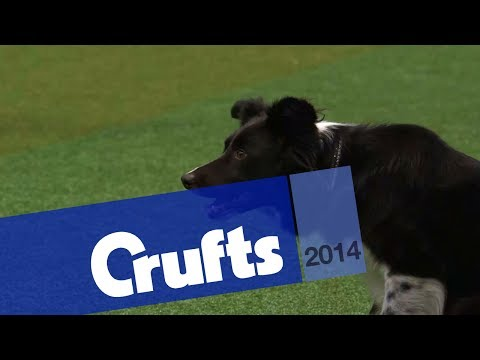Agility | International Invitation | Large | Jumping | Crufts 2014