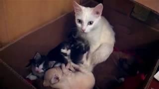 У кошки родились щенки и котята. The cat was born pupets and kittens.