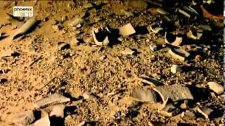Durch Gobi und Taklamakan - Universum - Söhne der Wüste