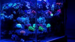亞馬遜水族60CM海水缸 1