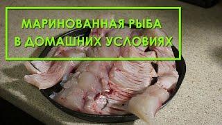 Маринованная рыба в домашних условиях (толстолобик, карп, скумбрия, селедь). Рецепт приготовления(В этом видео я поделюсь с Вами рецептом приготовления в домашних условиях маринованной рыбы. Рыбу для марин..., 2015-11-12T17:50:42.000Z)