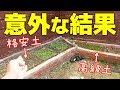 高級花壇と激安花壇で野菜を育てた結果…【ハイサイ農園#5】