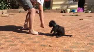 How To Train Your Dog To Sit, Paw And Lay Down