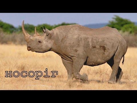 Видео Звірі африки