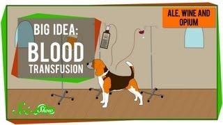 Repeat youtube video Big Idea: Blood Transfusions