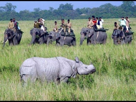 Kaziranga National Park welcomes tourists