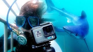 We Swam with Sharks and a GoPro – Here's What We Saw