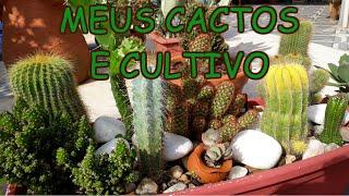 Aprenda a Cultivar Cactos – O melhor Substrato Orgânico