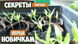 Секреты при посеве перца которые помогут новичку вырастить супер урожай! Посев перца советы!