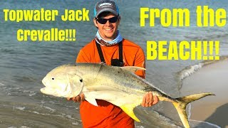 Topwater Jack Crevalle from the BEACH!!!